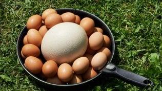 Di quaglia o di emù, bianche o verdi, minuscole o giganti, le uova celebrano la loro giornata mondiale